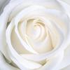 Белый цвет символизирует
