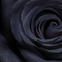 Черный цвет символизирует