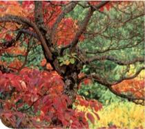 модные цвета осень - зима 2011