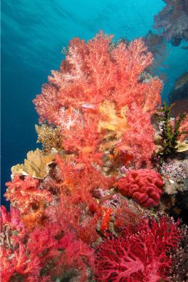 Цвета кораллов фото