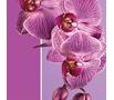 Орхидея— модный цвет 2014 года