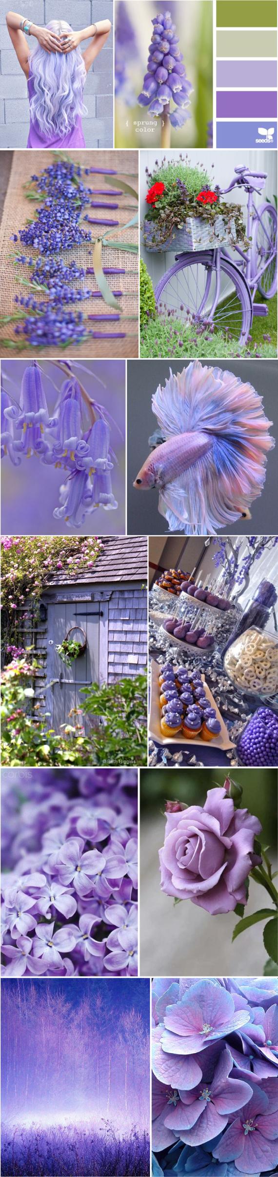 Пурпурный цвет и сочетание с ним LOOKCOLOR