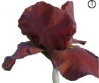 Красно-коричневый цвет