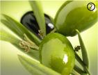 Зелено-оливковый цвет