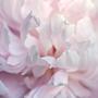 Бело-лиловый цвет