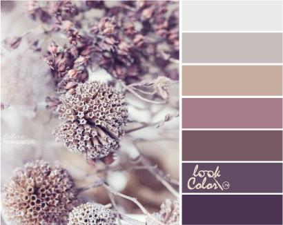 Сочетания лилового цвета