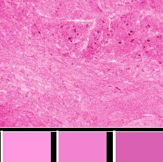 картинки цвета розового