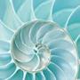 Цвет аквамарин и его сочетание