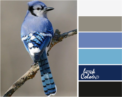Сине-лиловый цвет