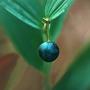 Коричневый зеленый синий