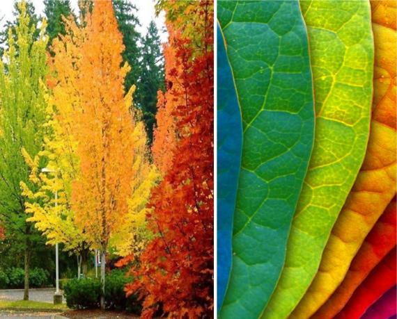 Красный, оранжевый, желтый, зеленый