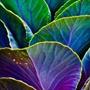 Синий, фиолетовый, зеленый