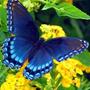 Синий зеленый желтый