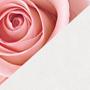 Белый и розовый - сочетание