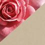 Бежевый и розовый сочетание цветов