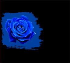Сочетание черного и синего цвета