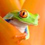 Оранжевый и зеленый цвет