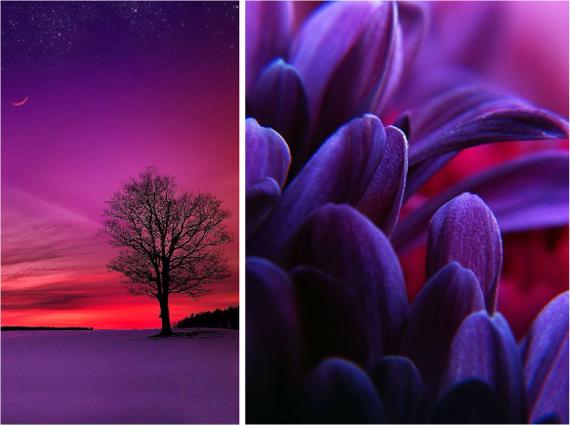Цвет красно фиолетовый