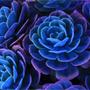 Синий и фиолетовый цвет