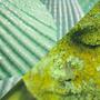 Теплый и холодный зеленый цвет