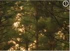 Коричнево-зеленый цвет фото