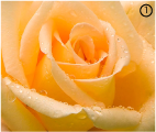 Розово-желтый цвет