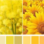 Холодный и теплый желтый цвет